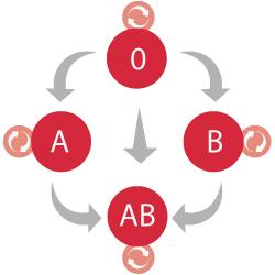 Compativiladad entre grupos sanguineos